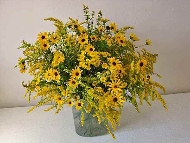 Goldenrod And Aster Bouquet Goldenrod Bloom July Through September In MO Fall Flower Guide