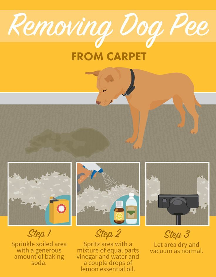 Dog Urine Stains On Carpet To Remove Okeviewdesignco