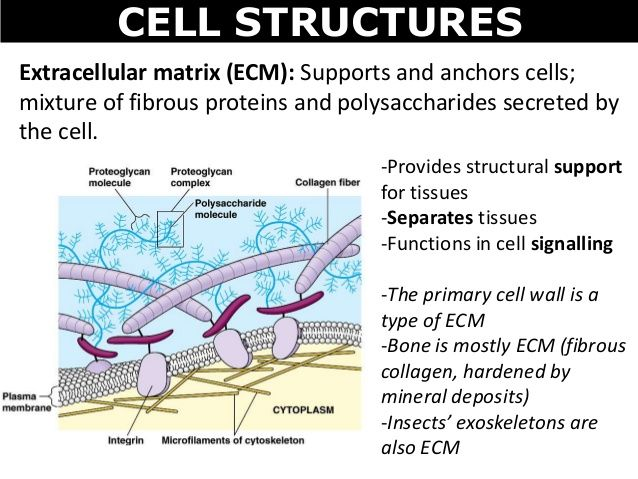 role of extracellular matrix emc molecular biology on cell wall function id=49325