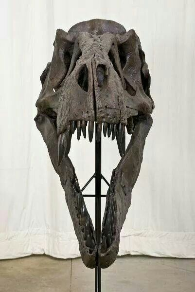 56 Best Images About Dinosaur On Pinterest Museums The