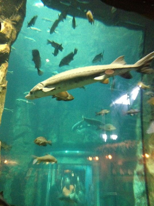 Great Lakes Aquarium In Duluth MN Duluths Sights