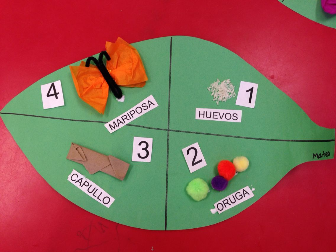 Butterfly Life Cycle Activity For Preschool