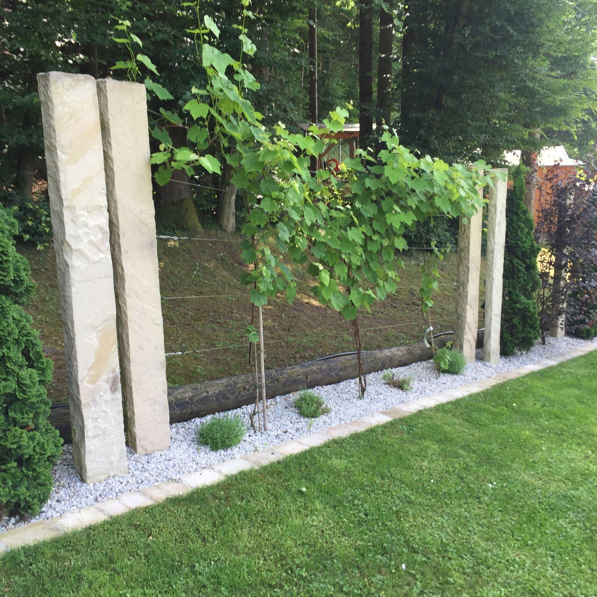 Unsere Weinreben Garten Pinterest Gardens