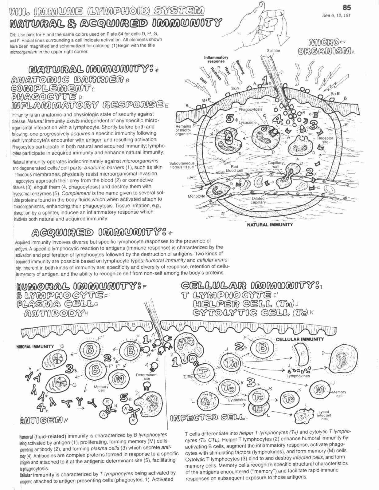 Integumentary System Worksheet Middle School