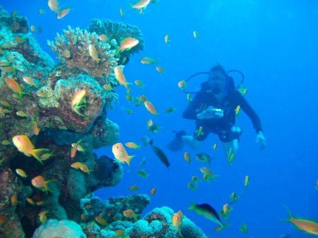 Scuba+Diving+Jobs