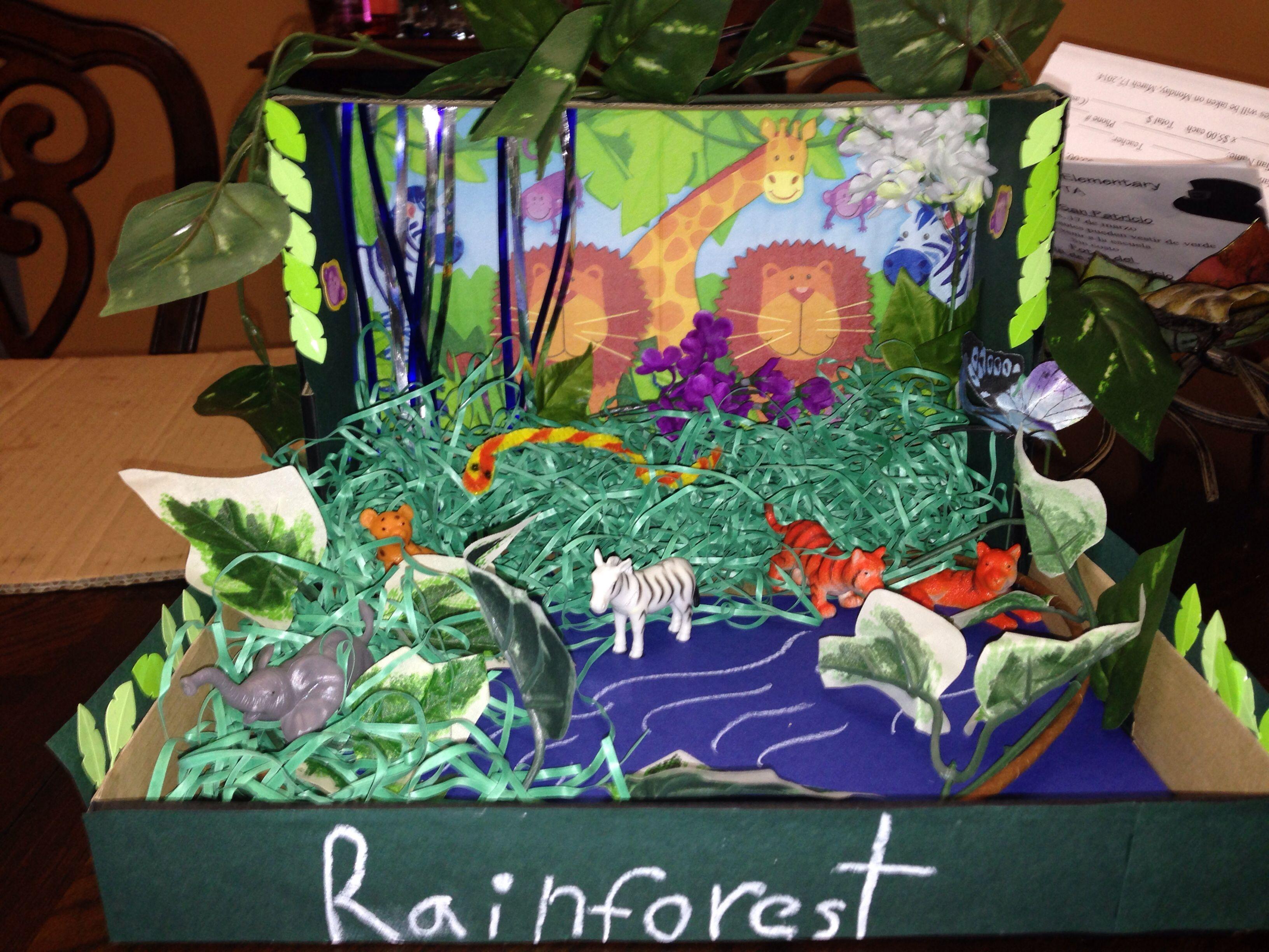 Rainforest Habitat Diorama Project 1st Grade