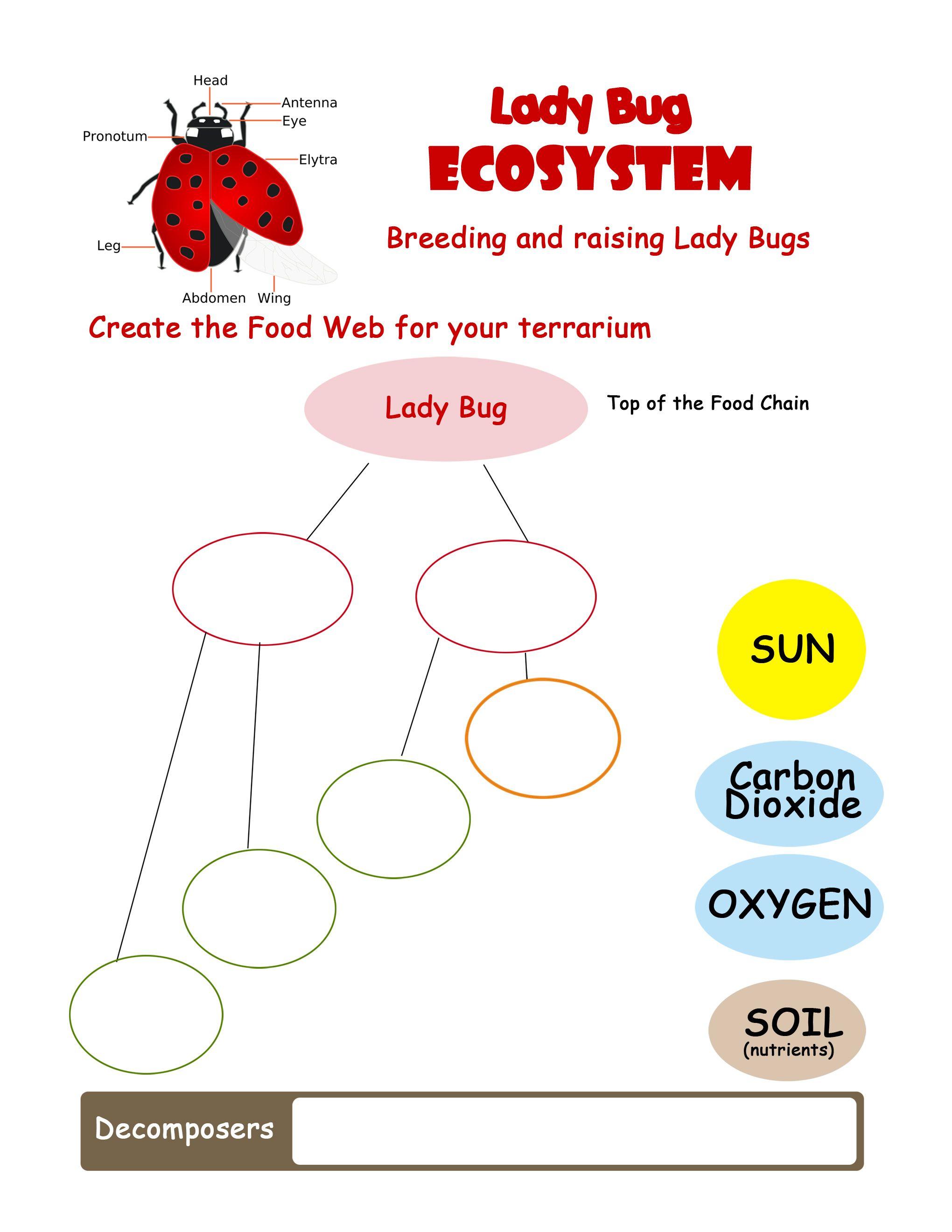 Ladybug Ecosystem Worksheet