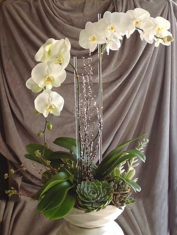 I Love Orchids With Succulents Mix Of Tropical And Desert