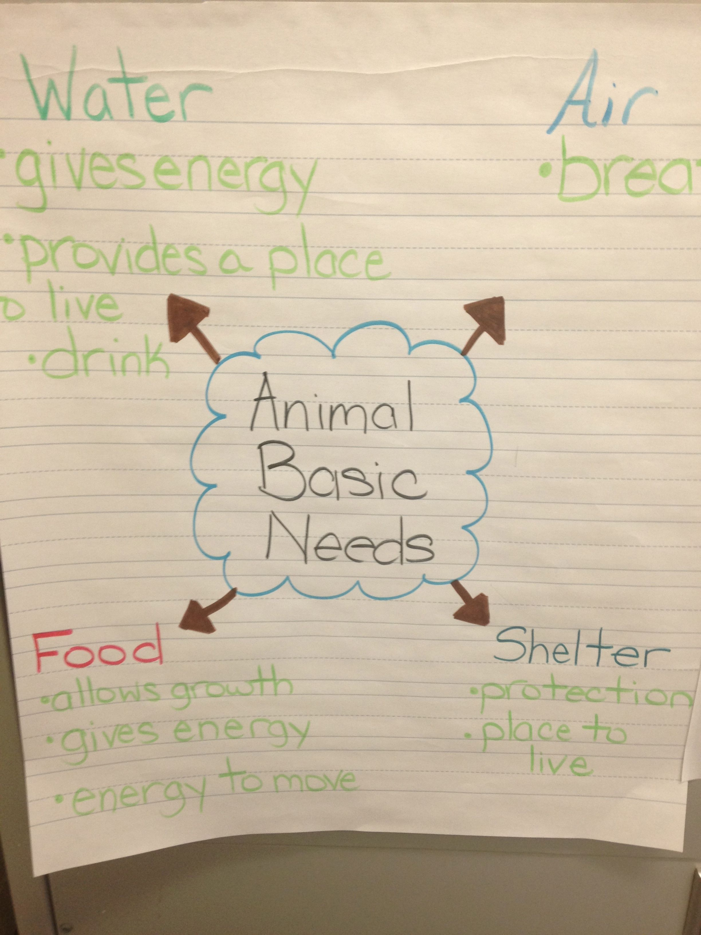 Animal Basic Needs