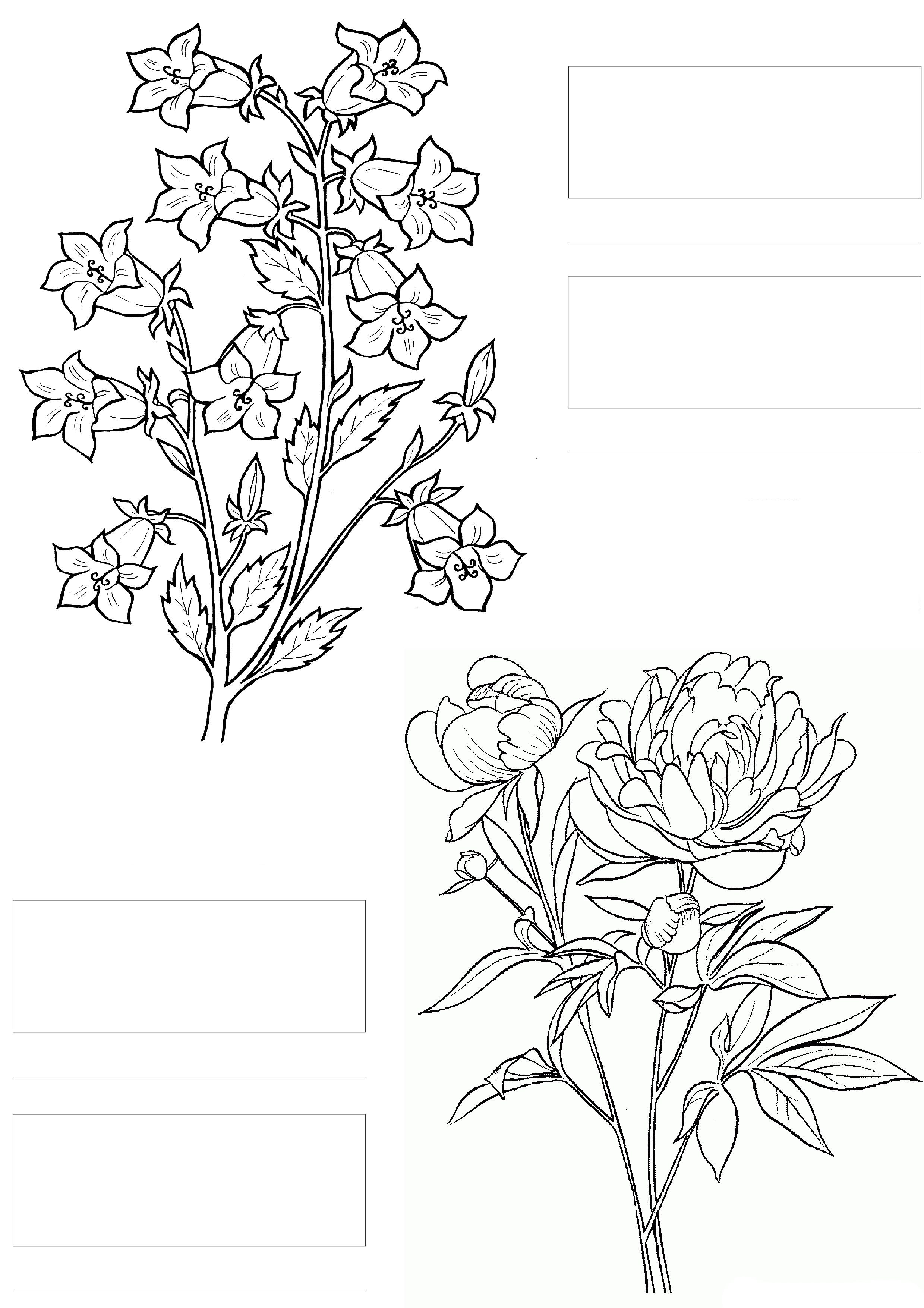 Complicolor Copic Coloring Printable Pages And Coloring Books For Grown Ups At