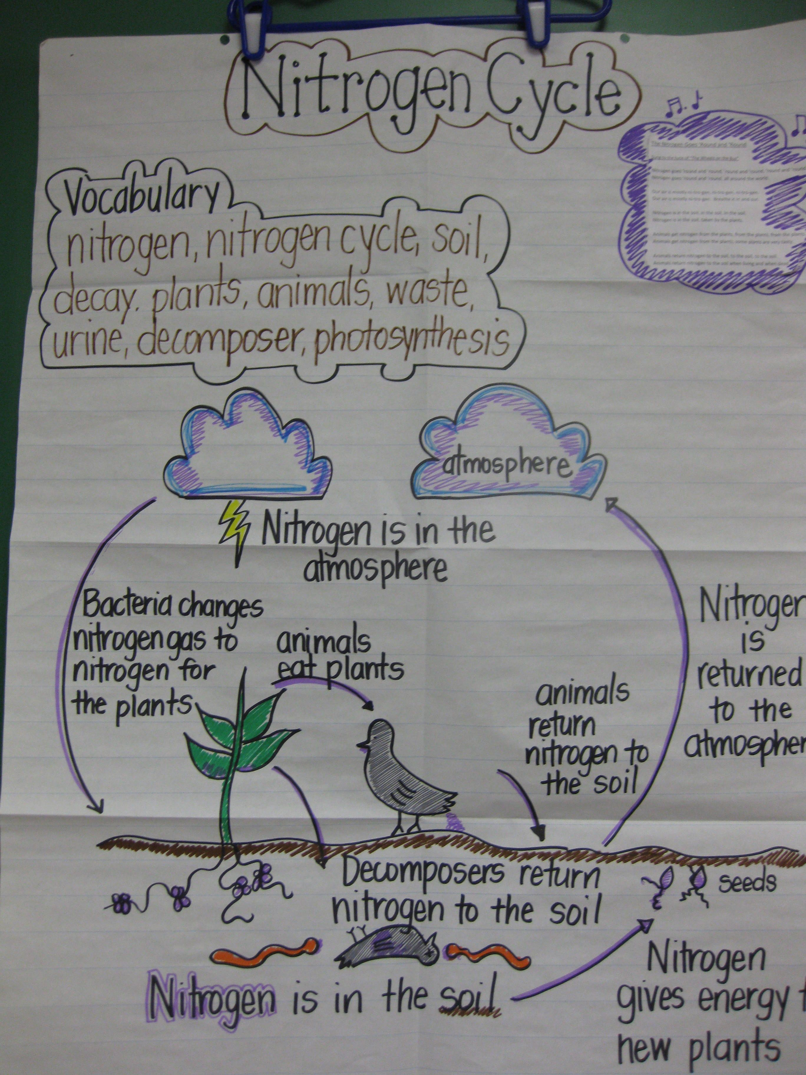 Staar Review Anchor Chart I Make This One To Review The Nitrogen Cycle With Students Before The