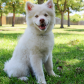 Dog training tips apdt train your dog month apdttrainyourdogmonth