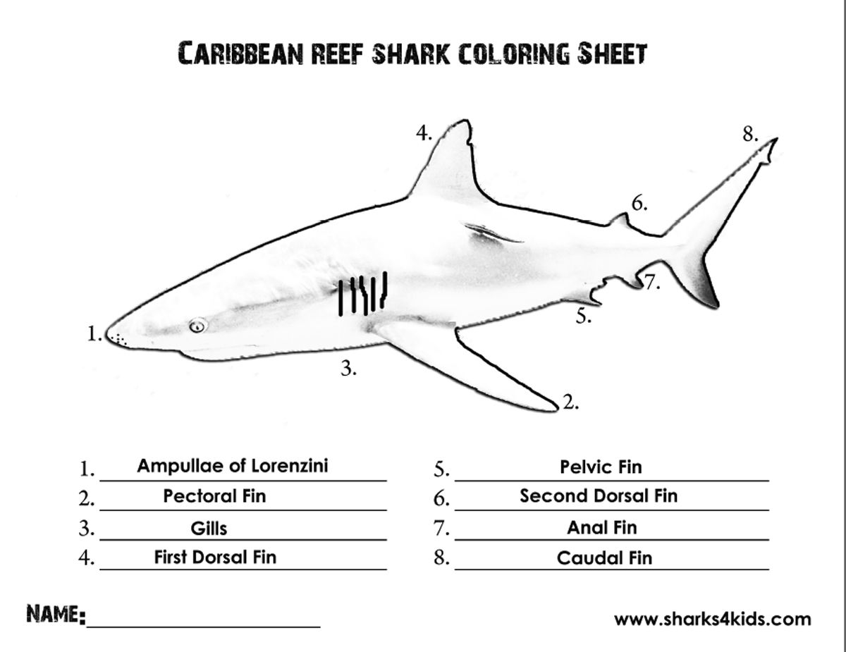 A Coloring Sheet That Will Help Kids Learn The Parts Of A Shark Download Here