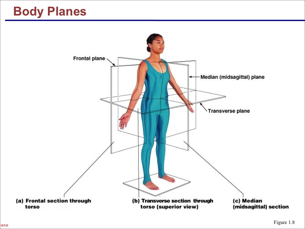 Planes Of The Human Body
