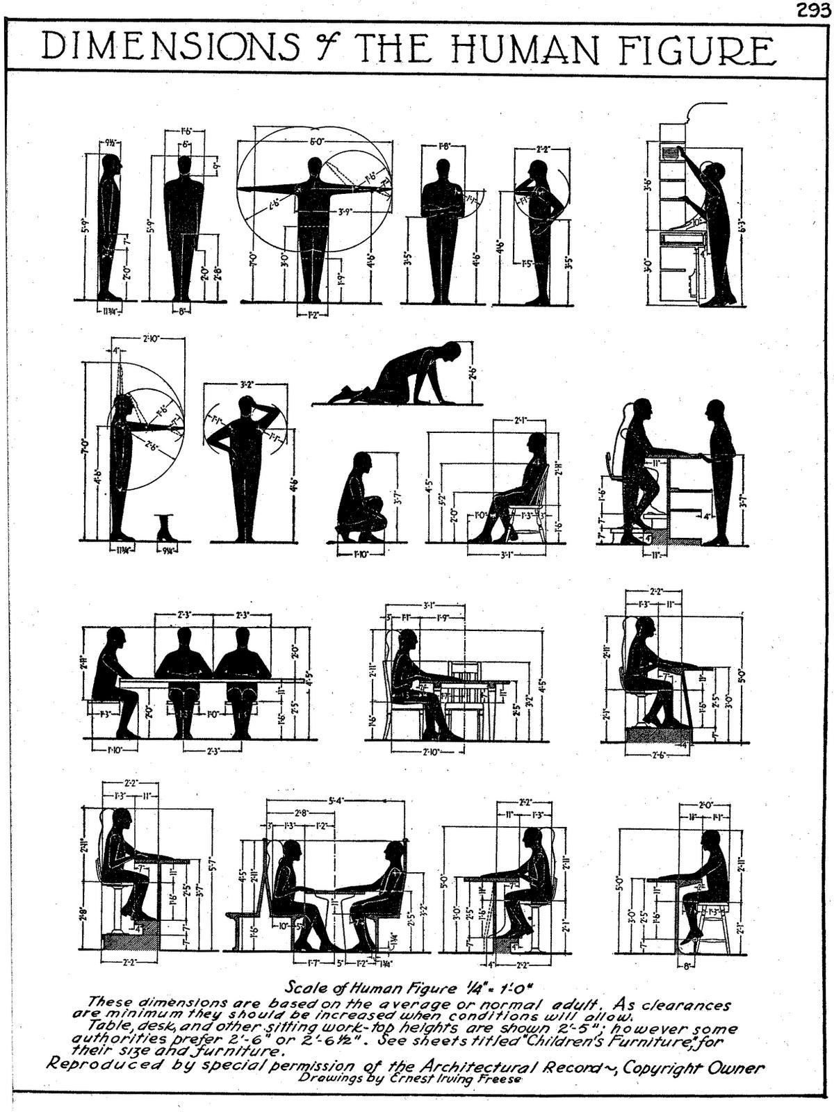 Dimensions Of Human Figure