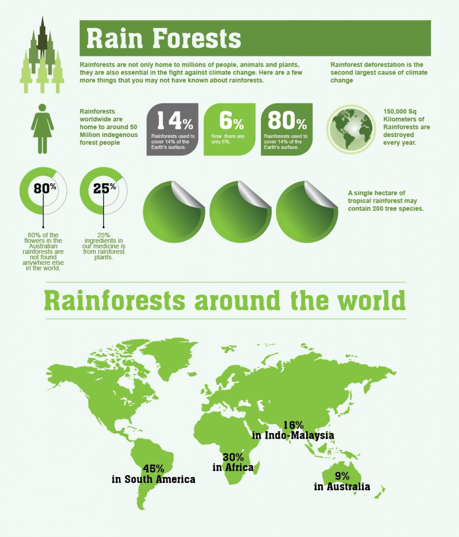 Rainforests Facts And Figures Infographic