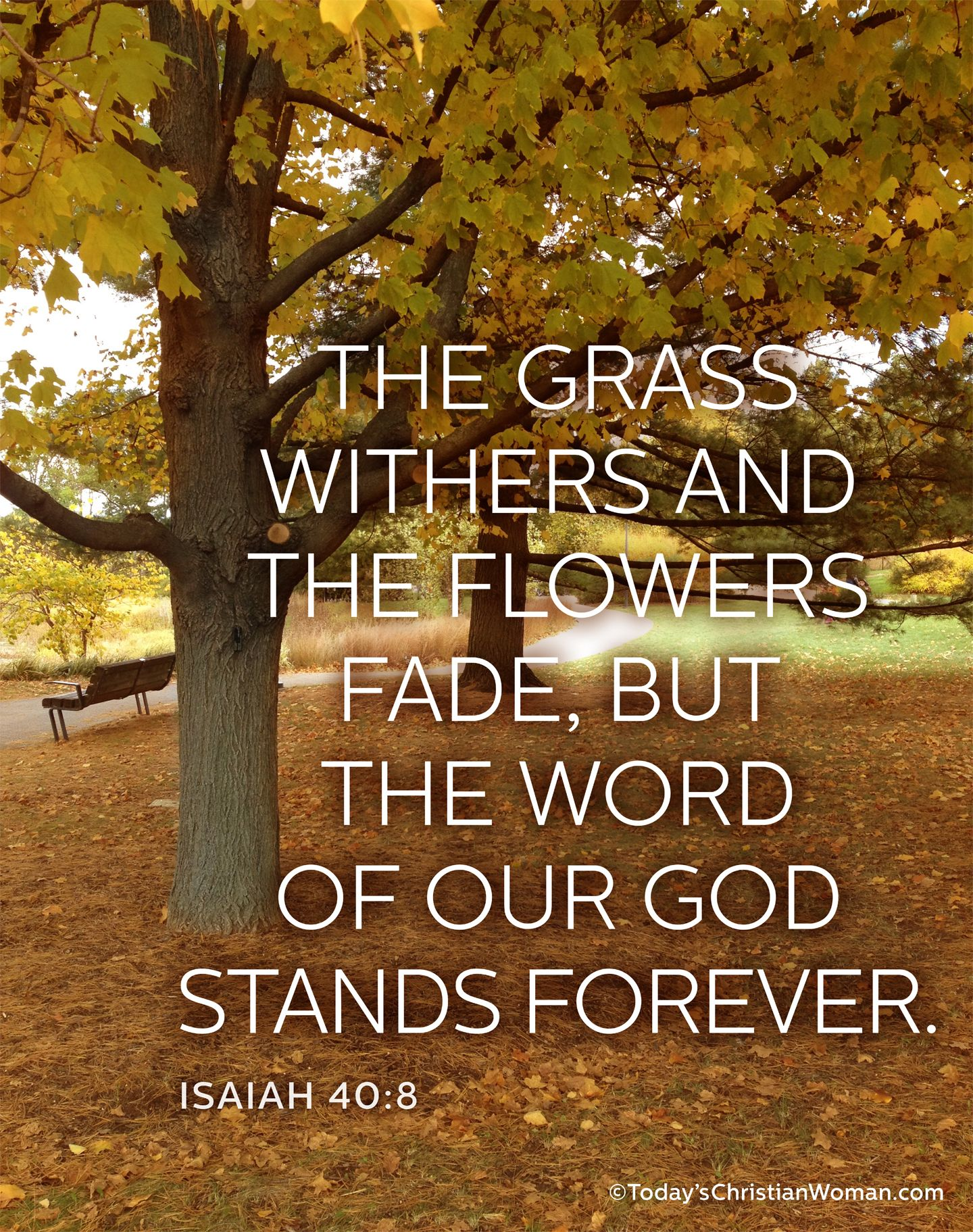 Isaiah 40 8 The Grass Withers And The Flowers Fade But