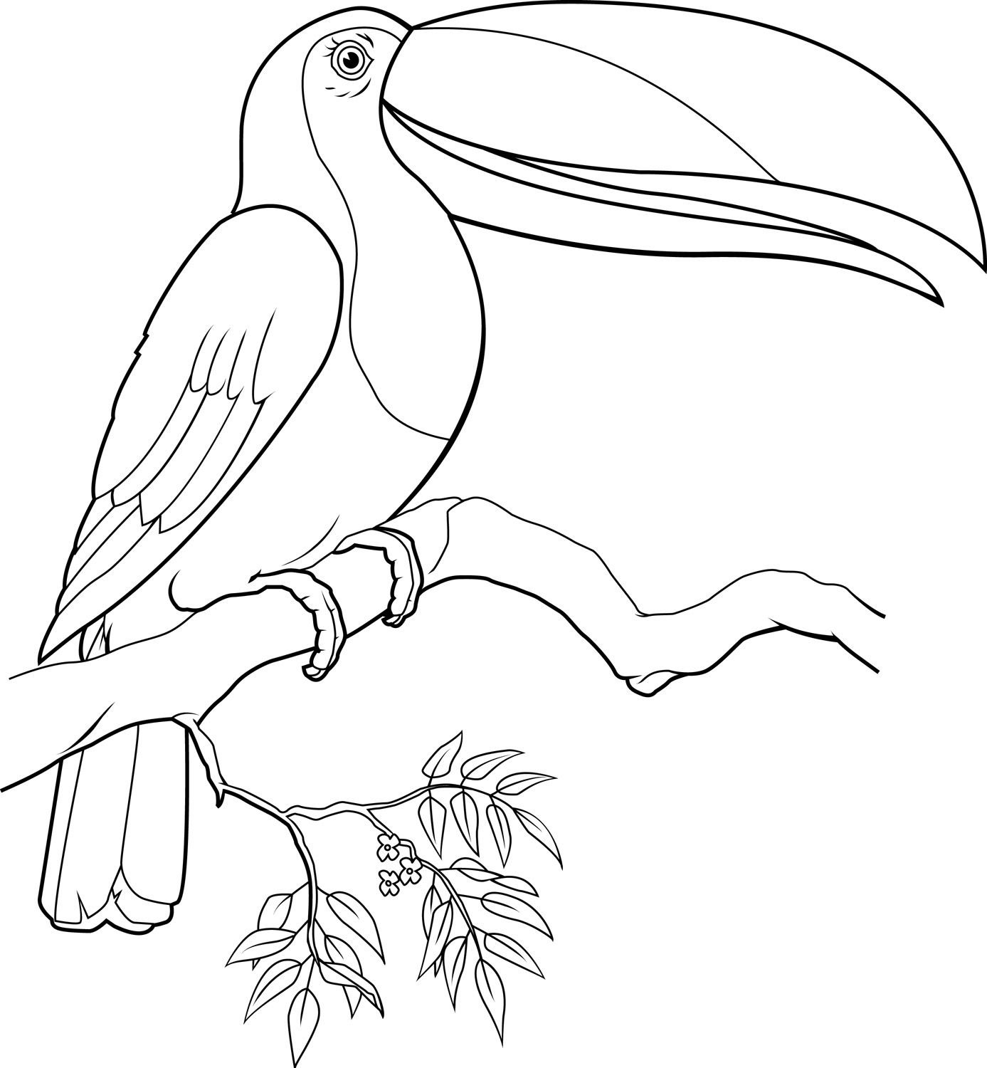 Coloring Page Of A Toucan Bird