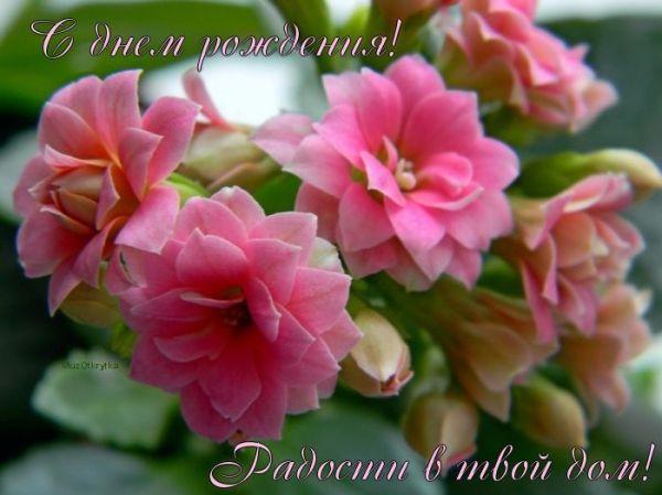 Красивые картинки с днем рождения женщине цветы картинка ...