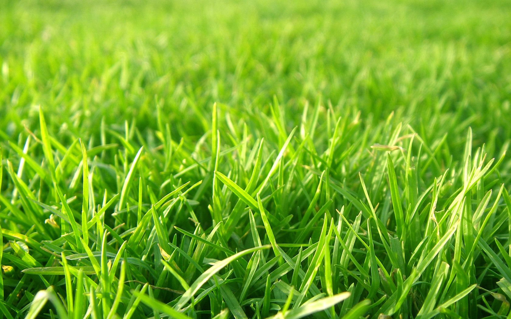 Grass Looks Sharp But Can Be Very Soft Implied