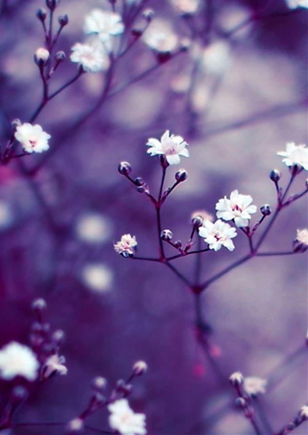 Картинки На Телефон Цветы Красивые