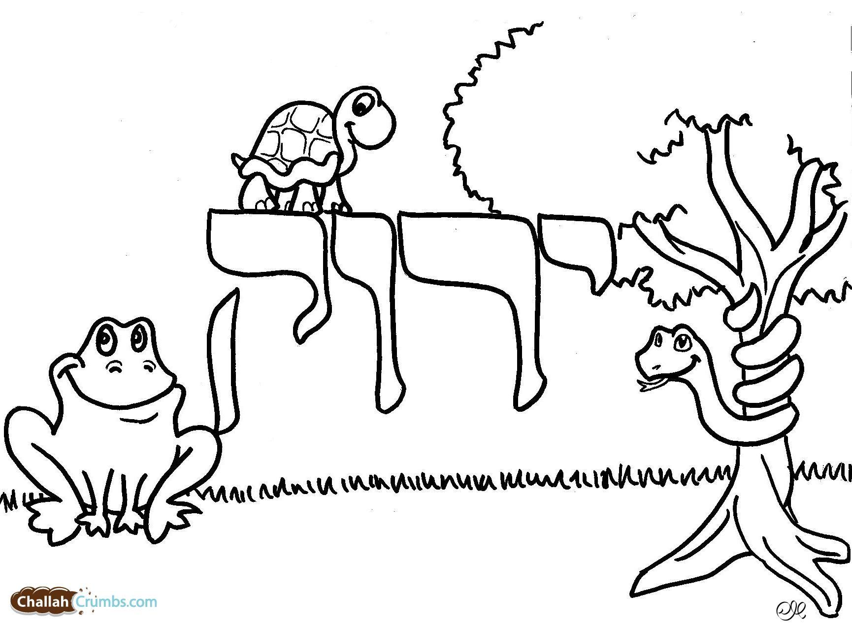 Pin By Rebecca Gaguine On Jewish Day School