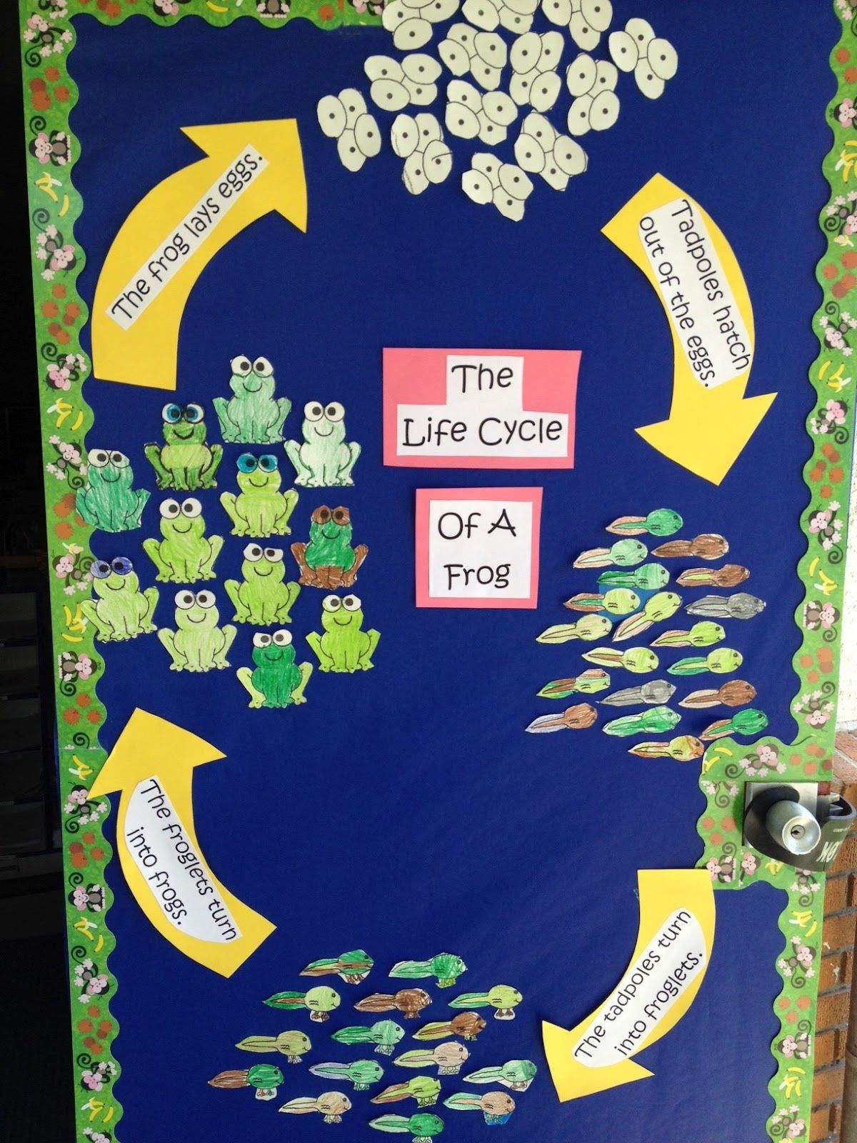 Apples And Abc S Life Cycle Of A Frog And Adorable Frog Book