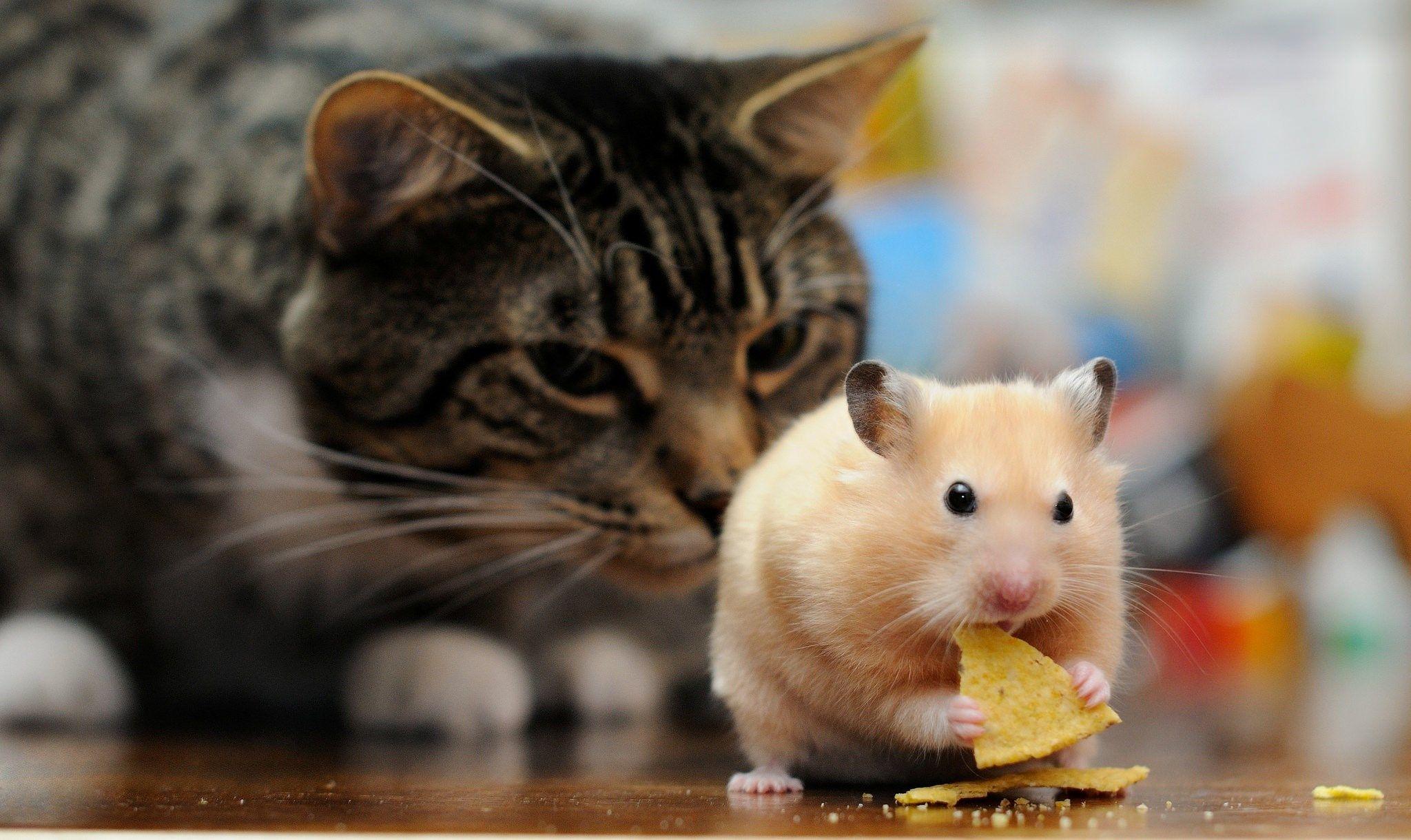free high resolution wallpaper hamster   hueputalo   pinterest