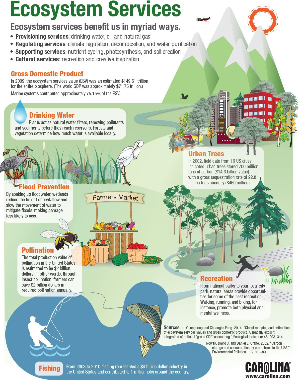 Infographic Ecosystem Services