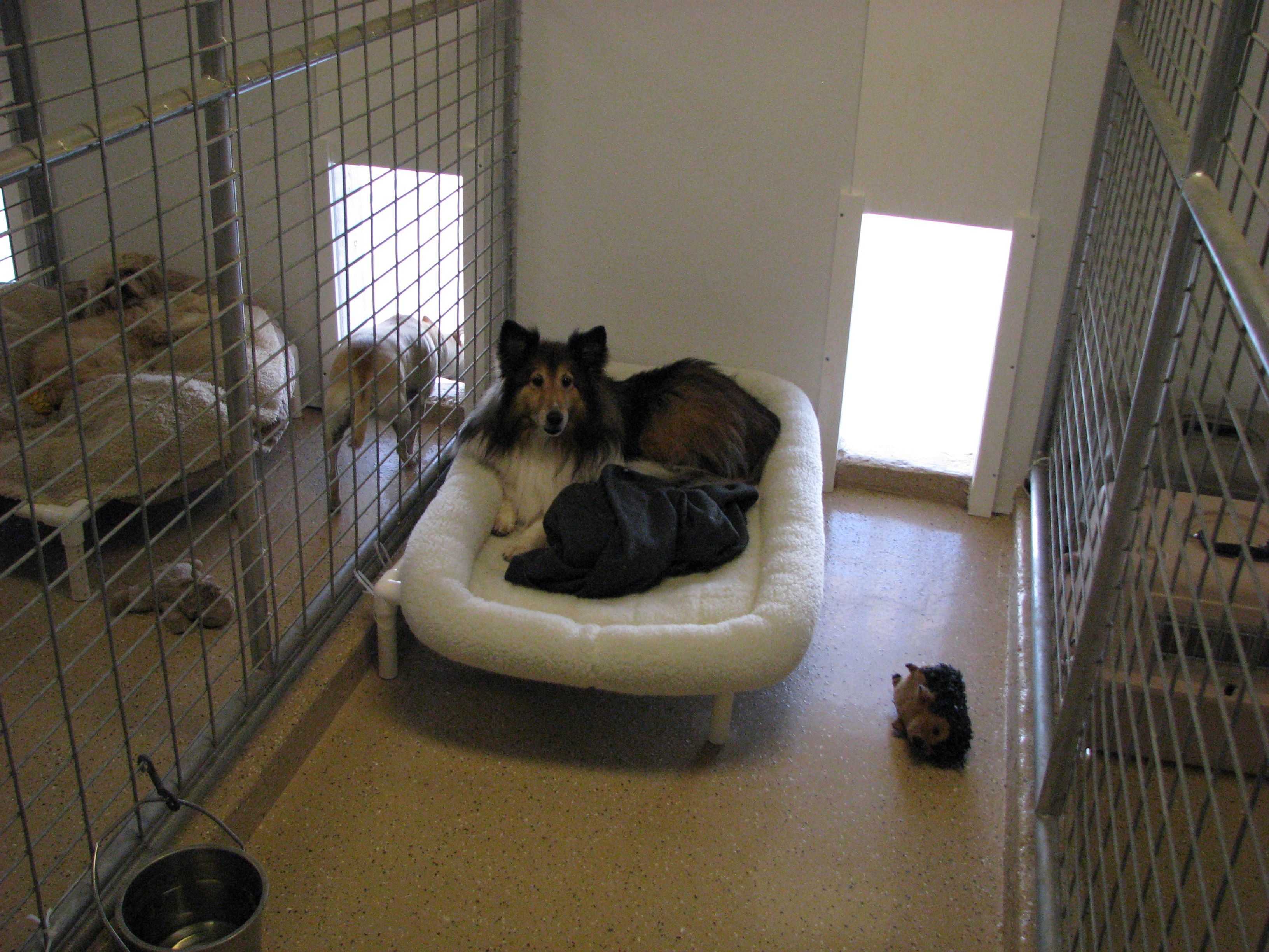 A lovely bed at Starr A day at Starr Pet Resort Pinterest