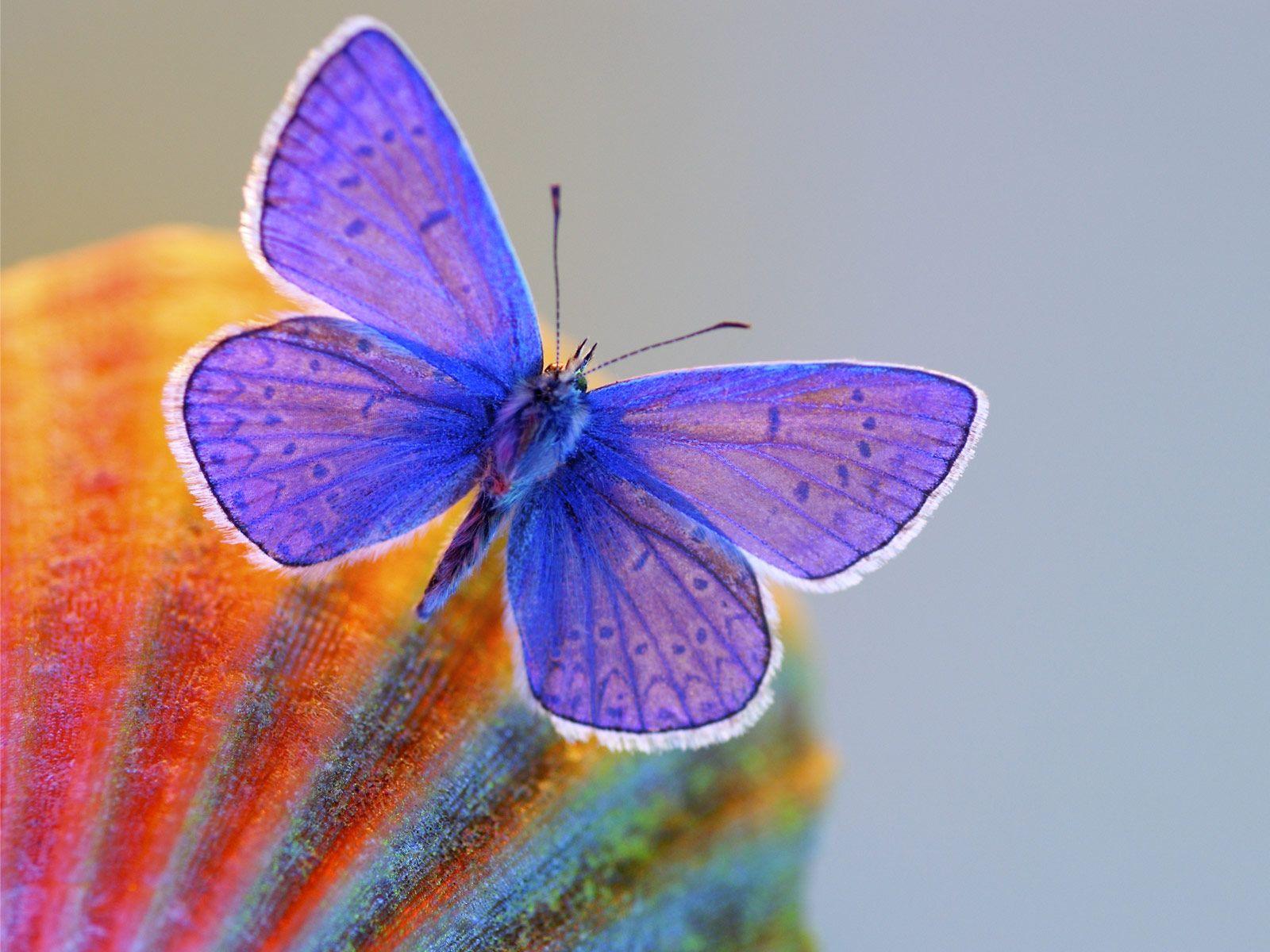 188 best color palettes - butterflies images on pinterest