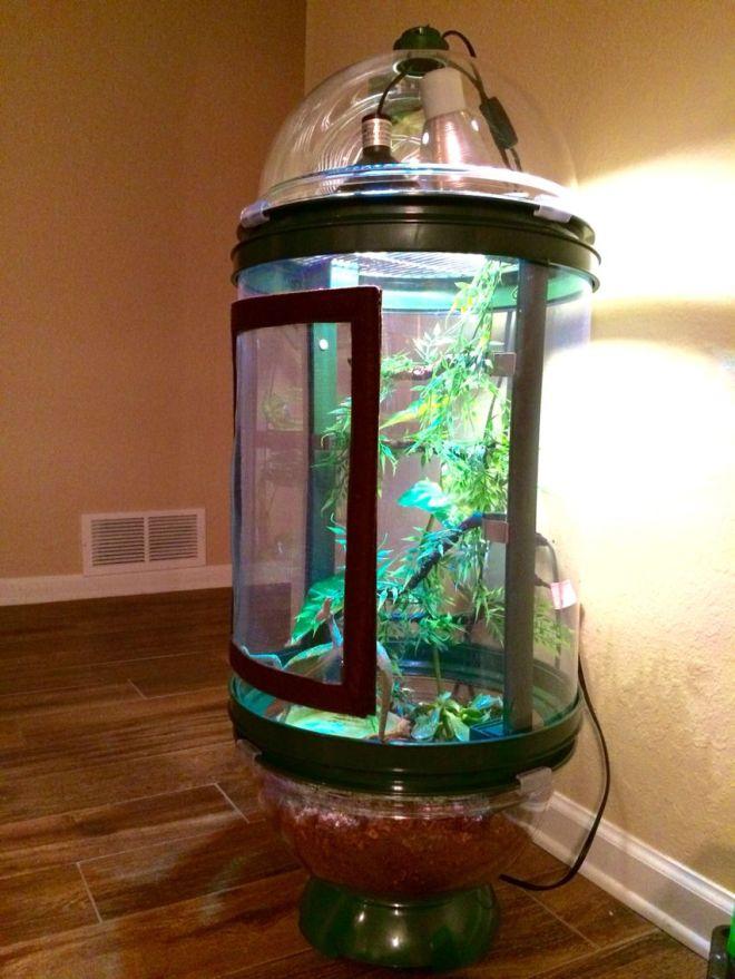 Chameleon cage bio bubble terrarium ideas pinterest