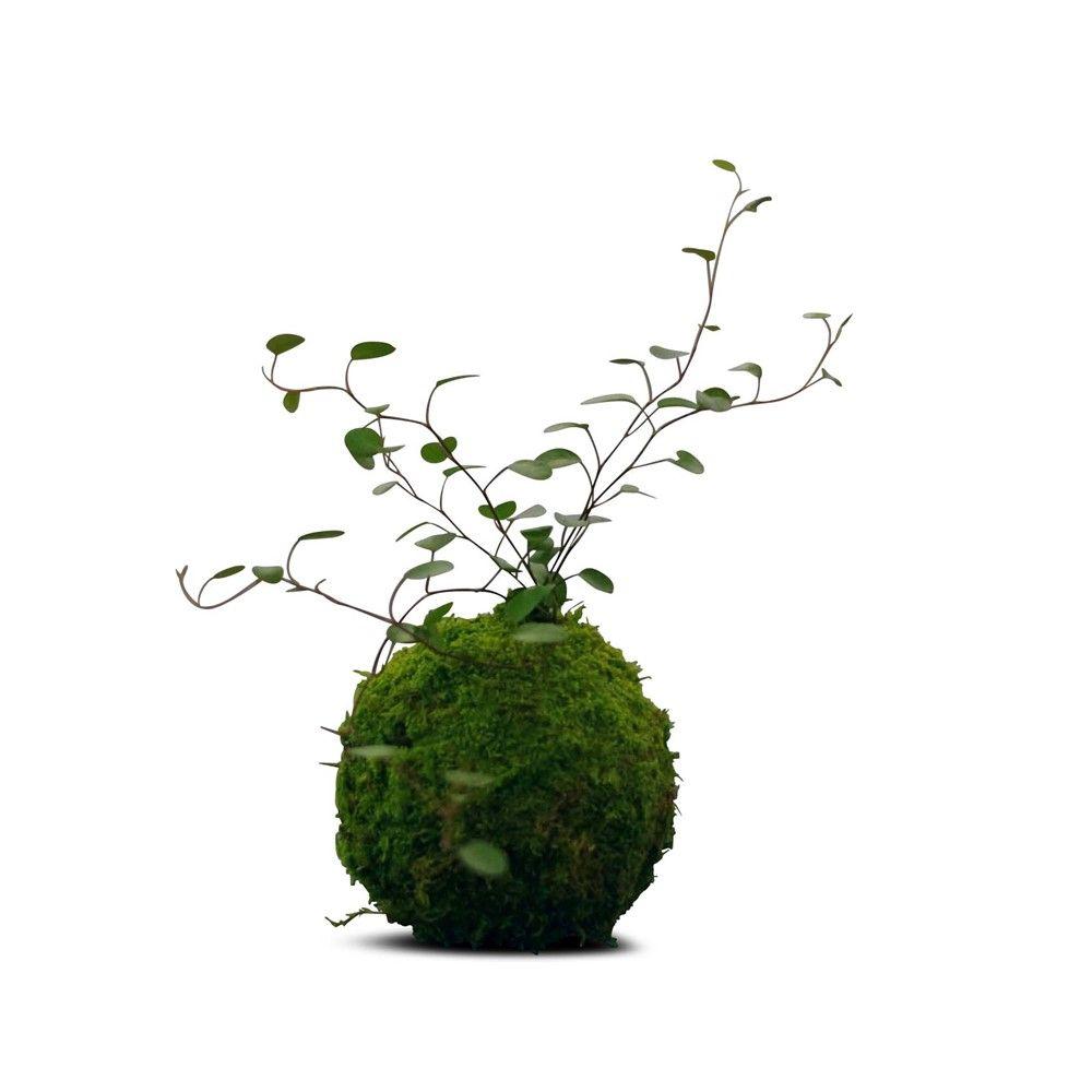 art vegetal japonais kokedama aimante tesla magnet wedding decorationswedding ideasart floralbotanical