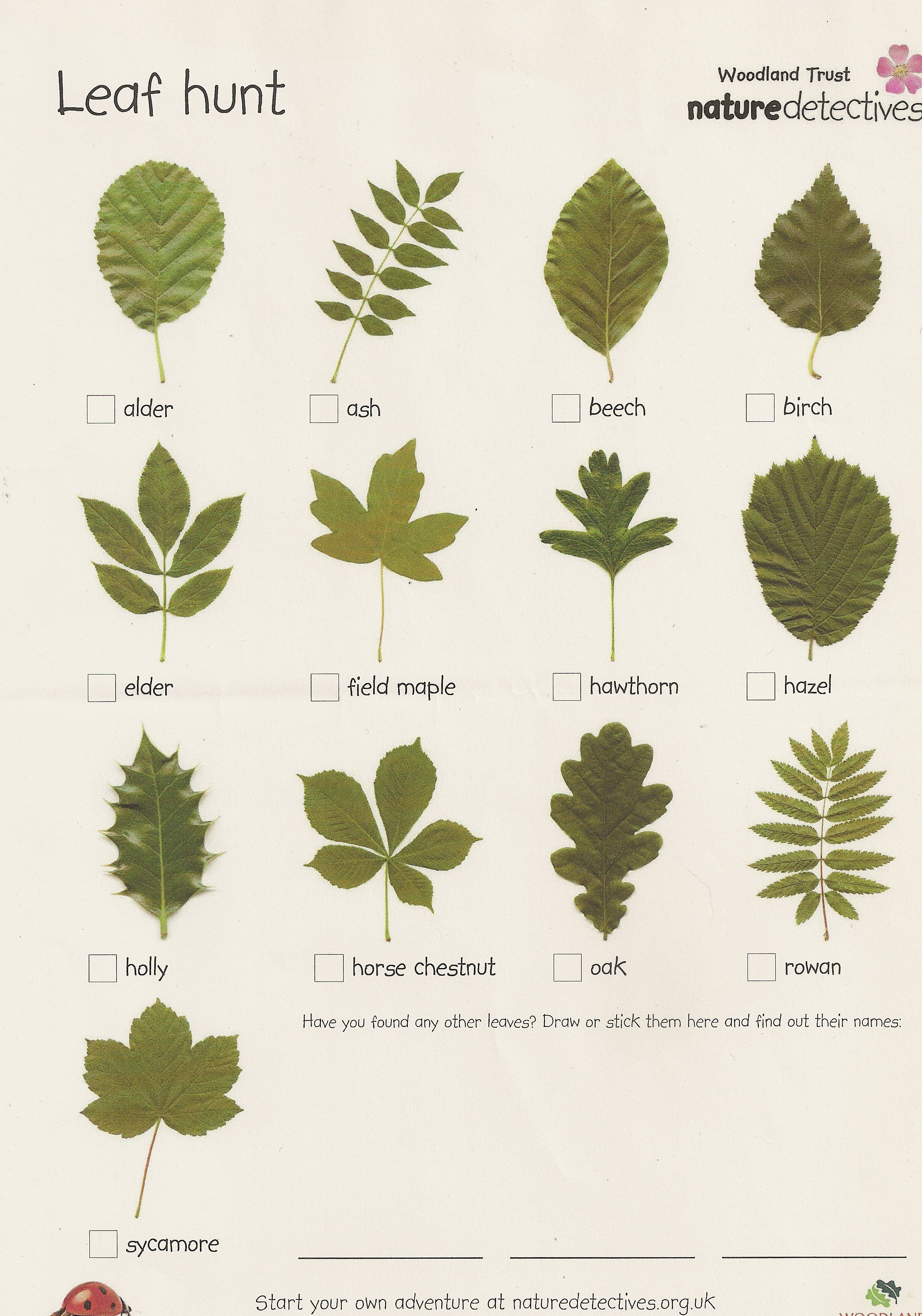 This Leaf Scavenger Hunt Can Engage Kids In Preschool Kindergarten 1st And 2nd Grade In A