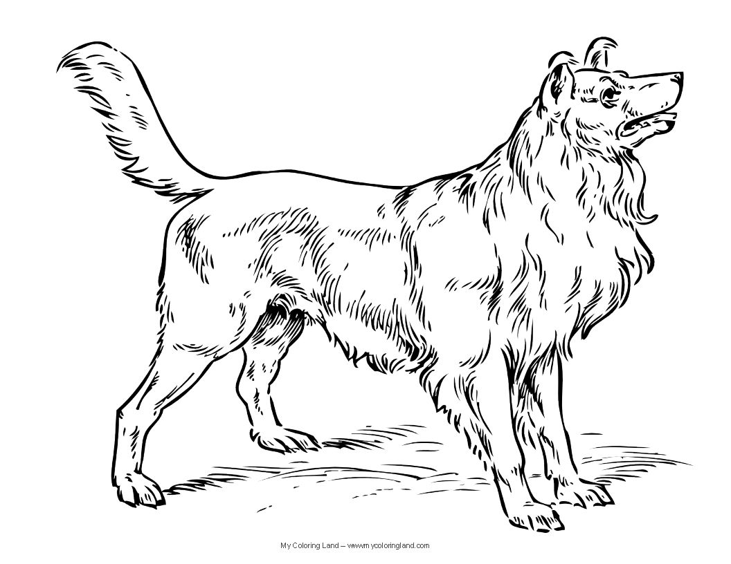 Dogs Clor Page Dog Coloring Pages Alexis Pinterest Dog