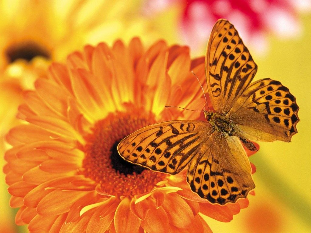 503 best the butterfly garden images on pinterest | the butterfly
