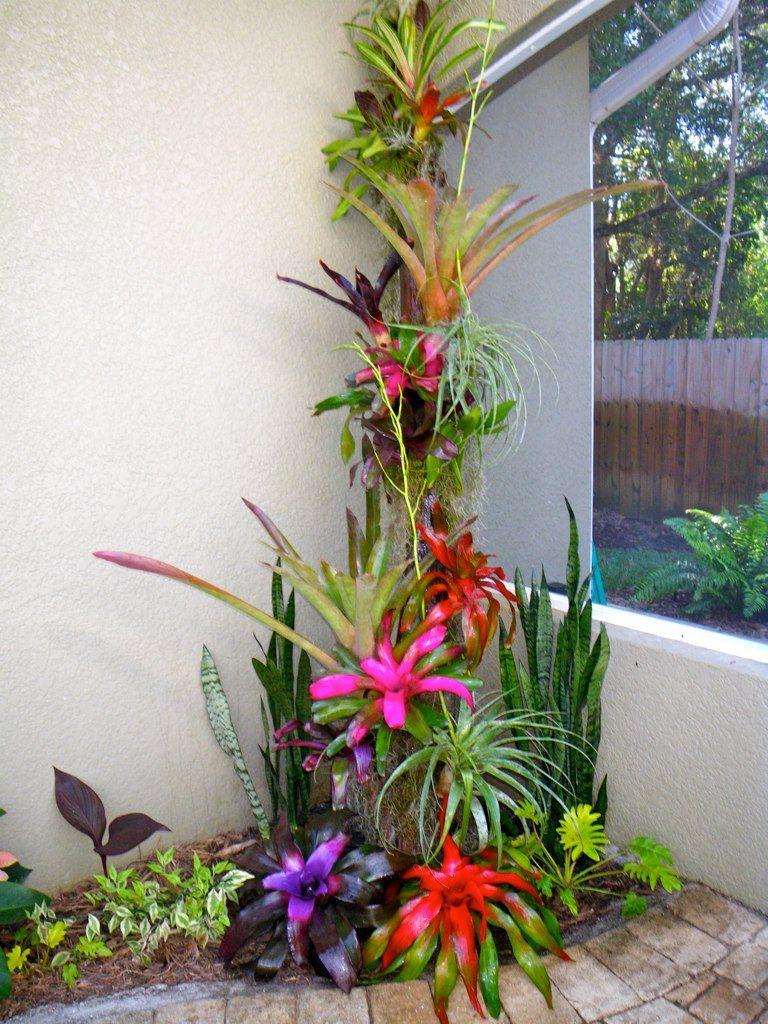 Pool Lanai Plantings Green Pinterest Lanai Planting