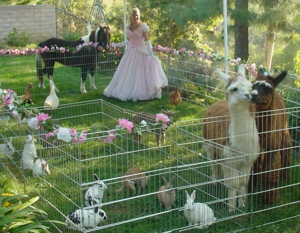 Image result for mini petting zoo rental wedding