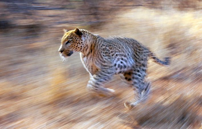 Shutter Speed - wildlife photography tips