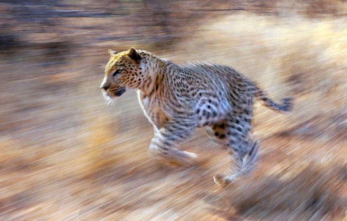 Shutter Speed - wildlife photography tips
