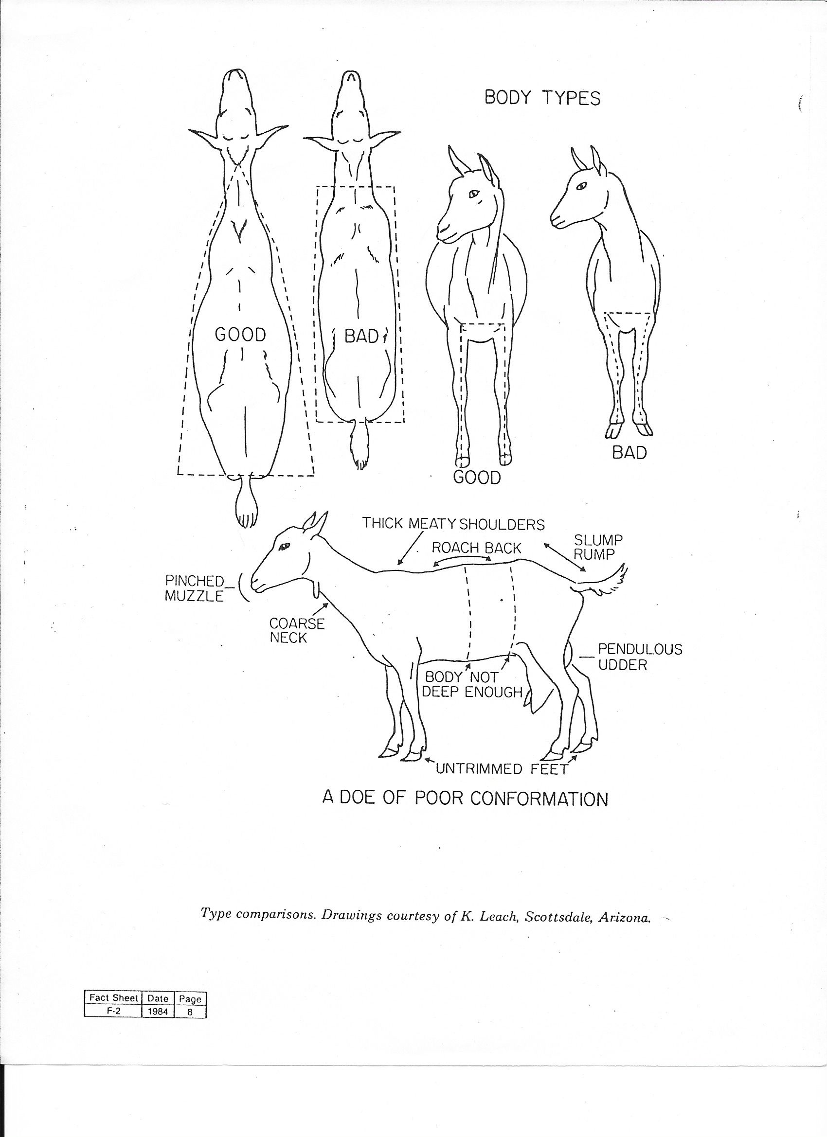 4 H Boer Goat Parts Wiring And Engine Diagram
