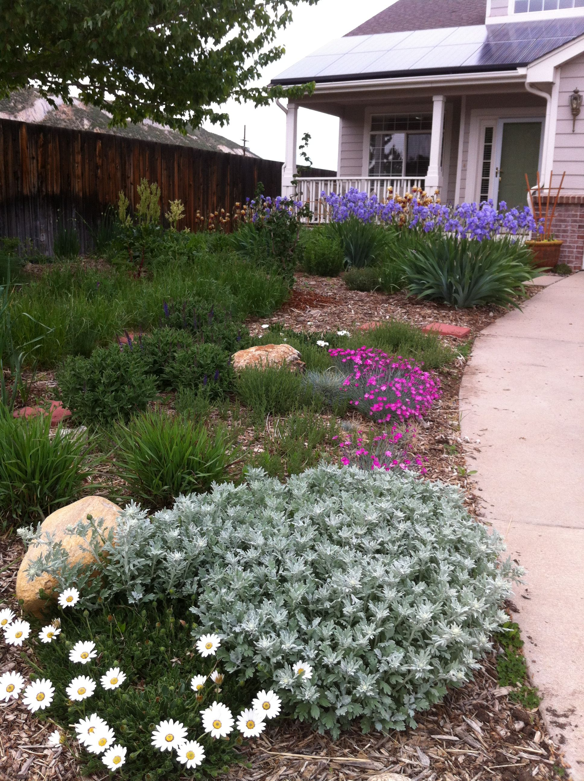 Front Yard Xeriscape Ideas | Gleason completely converted ... on Xeriscape Yard Ideas  id=47284