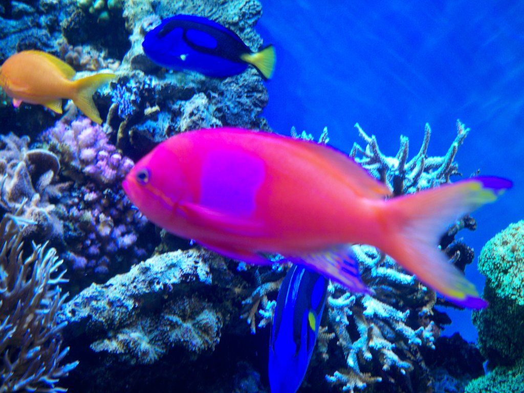 Coral Reef Fish Danger