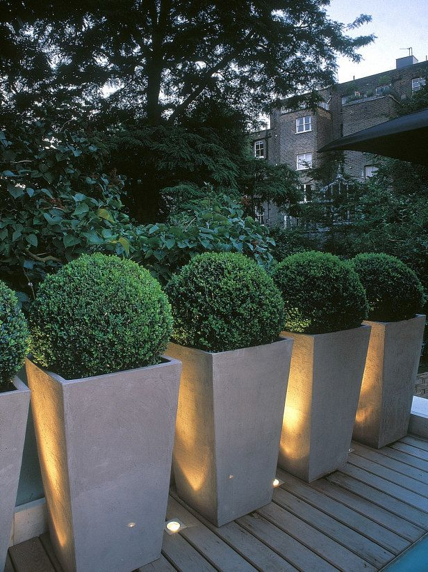 An example of using containers to create a typical hedge. Instead of plantings these boxwood straight in the ground, they are