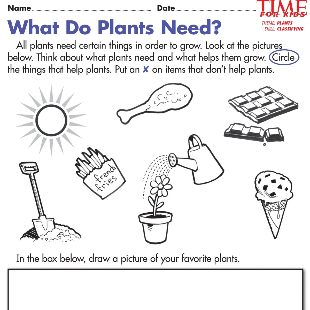 Seeds Worksheet For Kindergarten