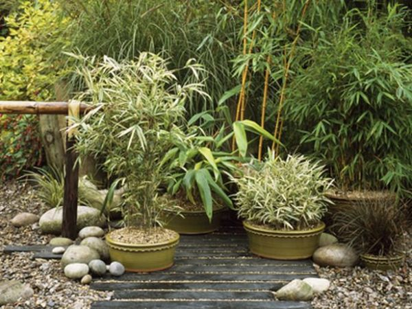 japanese gardens with bamboo Japanese Garden in Containers: Plant the Bamboos Place