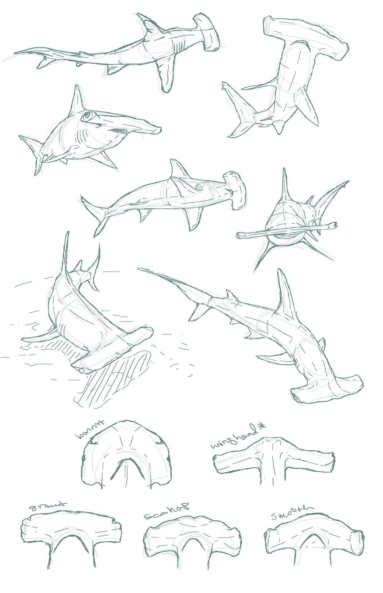 Edemoss Hammerhead Sketches I Did For A Piece
