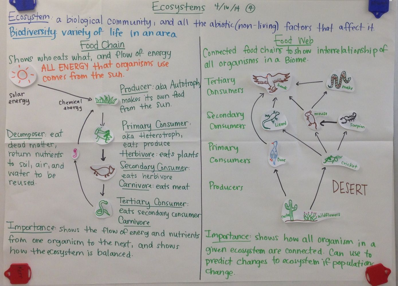 Ecosystems Food Web Biology Glad Anchor Chart