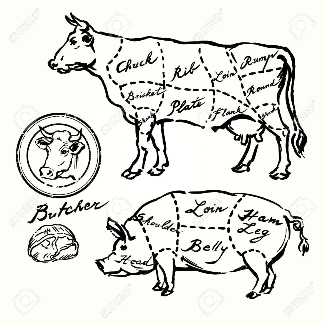 Pork And Beef Cuts Hand Drawn Set Stock Vector