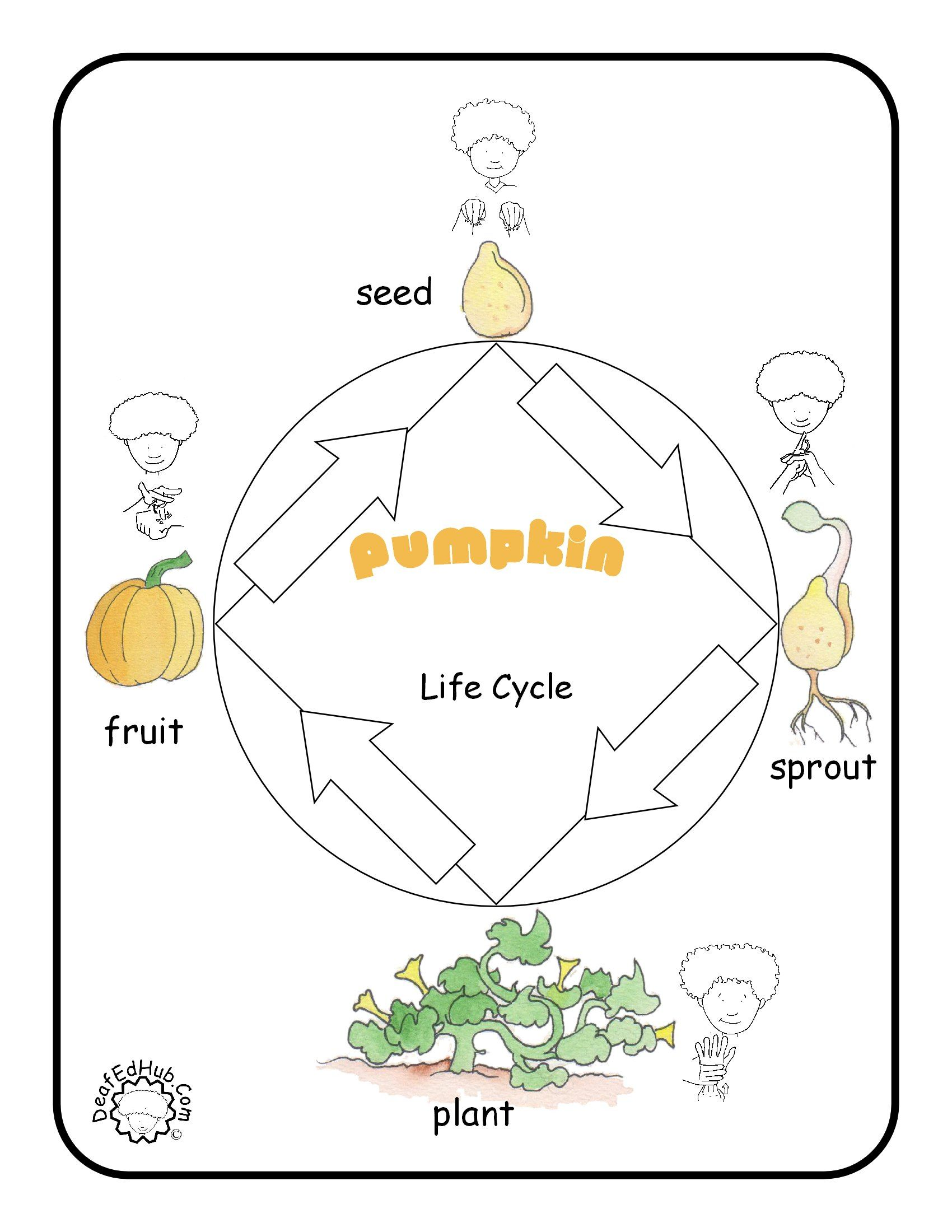 Asl Poster Pumpkin Lifecycle